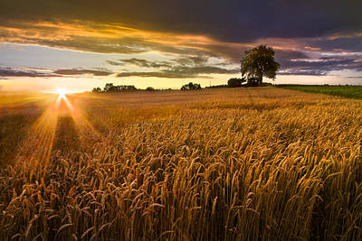 Sunlight On The Wheat Fields Poster