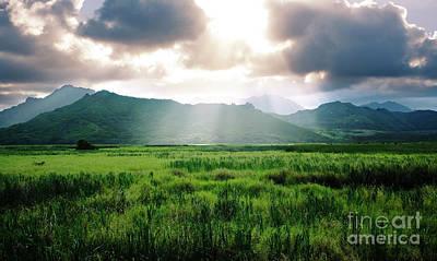 Sunlight Over Kawai Nui Marsh Poster by Charmian Vistaunet