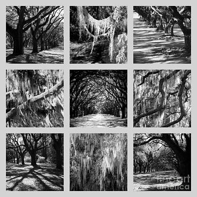 Sunlight Through Live Oaks Collage Poster by Carol Groenen