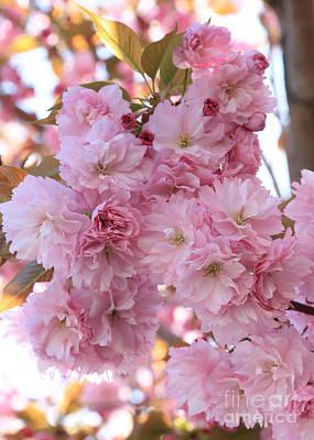 Sunlight Through Pink Blossoms Poster by Carol Groenen