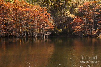 Poster featuring the photograph Sunlit Cypress Trees On Beaver's Bend by Tamyra Ayles