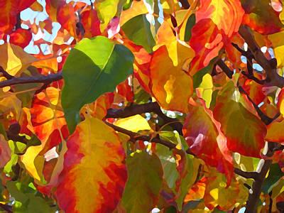 Sunlit Fall Leaves Poster by Amy Vangsgard