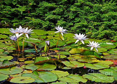 Sunlit Lily Pond By Kaye Menner Poster