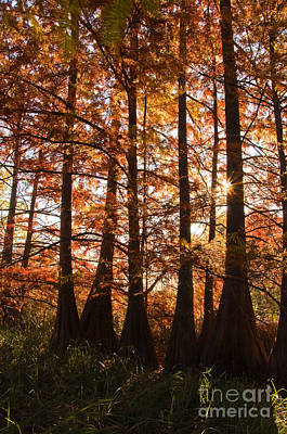 Poster featuring the photograph Sunlit Trees At Lake Murray by Tamyra Ayles