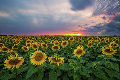 Sunny Disposition  Poster by Aaron J Groen