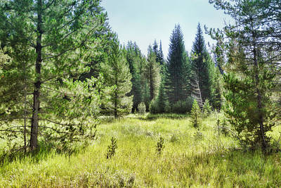 Sunny Mountain Meadow - Landscape Photograph Poster by Ann Powell