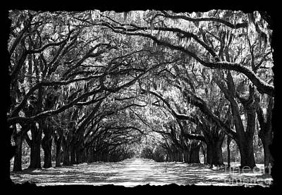 Sunny Southern Day - Black And White With Black Border Poster
