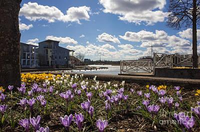 Sunny Spring Flowers In Helsinki Poster