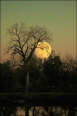 Poster featuring the photograph November Supermoon  by Chris Berry
