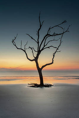 Sunrise And A Driftwood Tree Poster