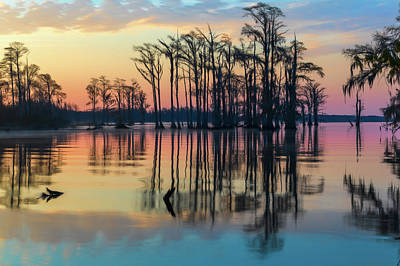 Sunrise, Bald Cypress Of Nc  Poster