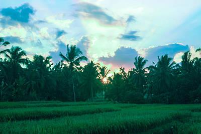 Sunrise Breaking Over Rice Poster