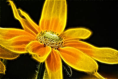Poster featuring the photograph Sunrise Daisy by Cameron Wood