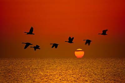 Sunrise Flight Poster by Steve Gadomski
