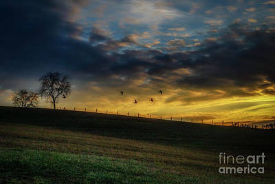 Sunrise Flight Poster by Thomas R Fletcher