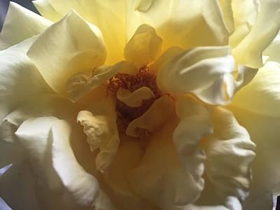 Sunrise Flower Poster