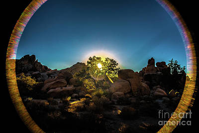 Sunrise Joshua Tree National Park Poster by Timothy Kleszczewski