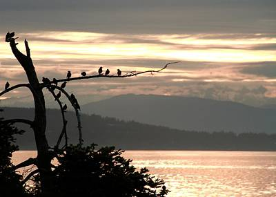 Sunrise Silhouettes San Juan Island Poster by Dan Sproul