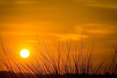 Sunrise Through Frederica Marsh Reeds Poster