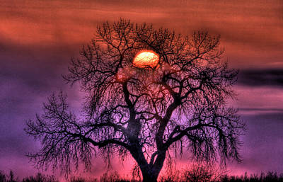 Sunrise Through The Foggy Tree Poster by Scott Mahon