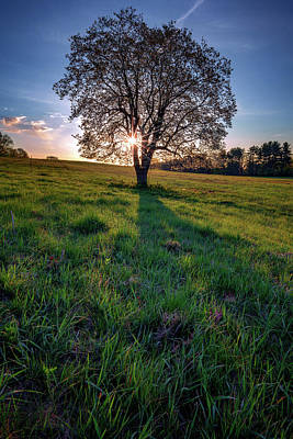 Sunrise Through The Tree Poster