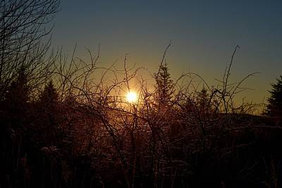 Sunrise Thru The Brush Poster