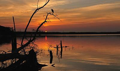Poster featuring the photograph Sunset And Heron by Angel Cher