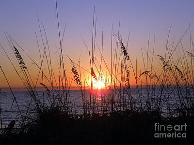Poster featuring the photograph Sunset And Seaoats by Terri Mills
