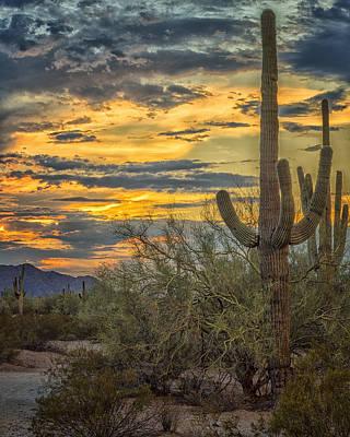 Sunset Approaches - Arizona Sonoran Desert Poster by Jon Berghoff