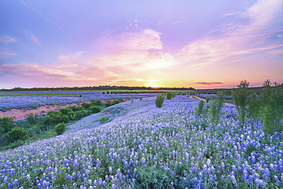Sunset At A Bluebonnet Field Poster by Ellie Teramoto