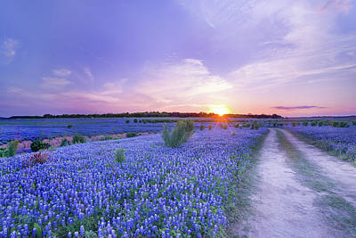 Sunset At The End Of Bluebonnet Field - Texas Poster