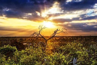 Sunset Beauty Poster