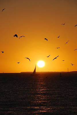 Sunset Birds Key West Poster by Susanne Van Hulst
