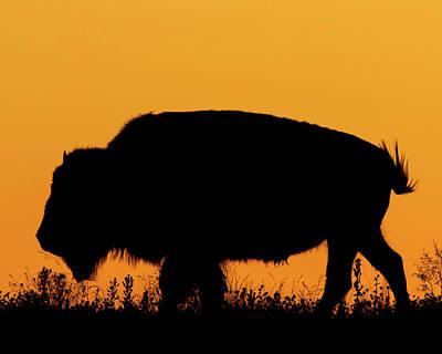 Sunset Bison 2 Poster