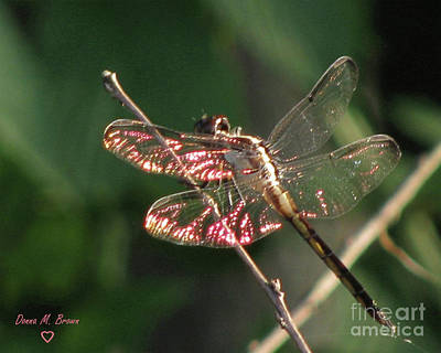 Poster featuring the photograph Sunset Dragonfly by Donna Brown