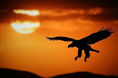 Sunset Eagle Poster