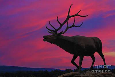 Sunset Elk Poster
