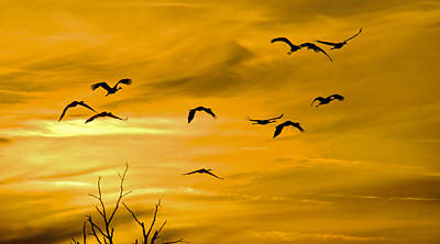 Poster featuring the photograph Sunset Fliers by Wanda Krack