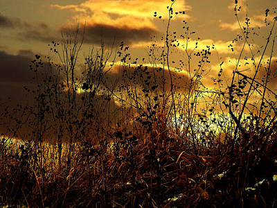 Sunset Grasses Poster