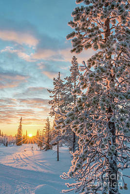 Poster featuring the photograph Sunset In Lapland by Delphimages Photo Creations