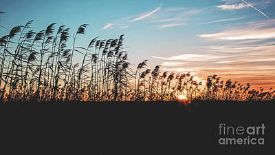 Sunset On Cameron Prairie National Wildlife Refuge Poster by Scott Pellegrin