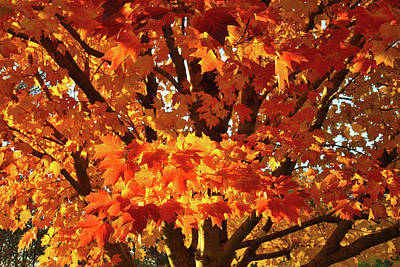 Poster featuring the photograph Sunset On Sugar Maple by Ray Mathis