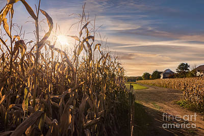 Sunset On The Corn Field Poster
