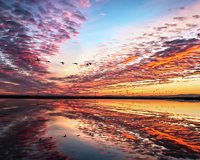 Sunset On The Pacific Flyway Poster