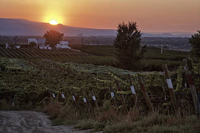 Sunset Over Colorado Vineyard Poster by Teri Virbickis