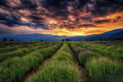 Sunset Over Lavender Field  Poster