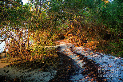 Sunset Path Through The Mangrove Poster