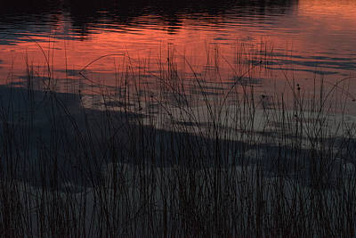 Sunset Reeds Poster by Gary Eason