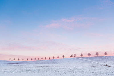 Sunset Sky And Trees Blue And Pink Poster by Matthias Hauser