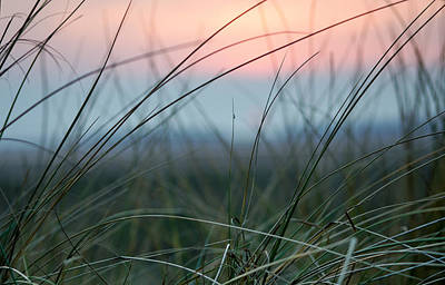 Sunset  Through The Marsh Grass Poster